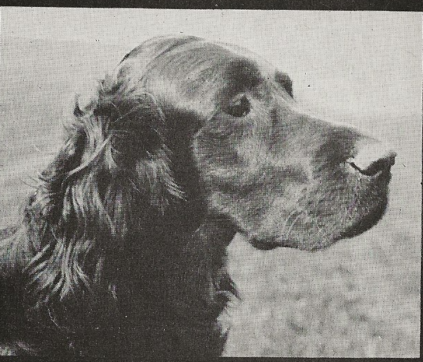 black and white image of head study of dog