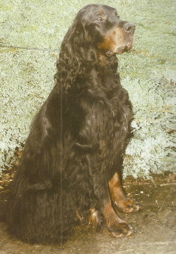 seated black and tan dog