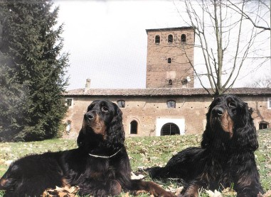 Two dogs lying down in front of castle