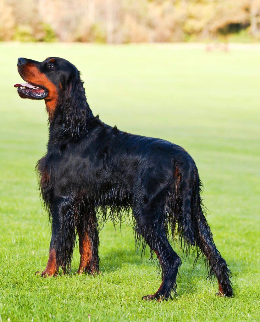 dripping wet dog